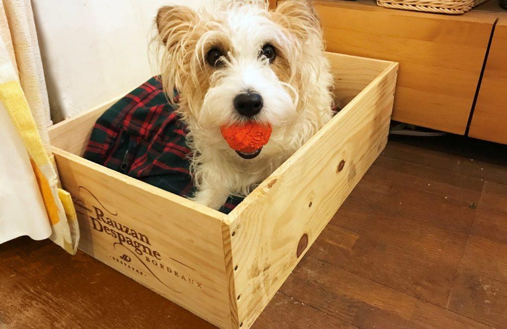 """ワインの木箱を利用して""""ワン""""ダフルな犬用べッドを作りました!!"""