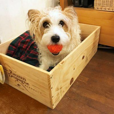 ワイン木箱で犬ベッドメイン
