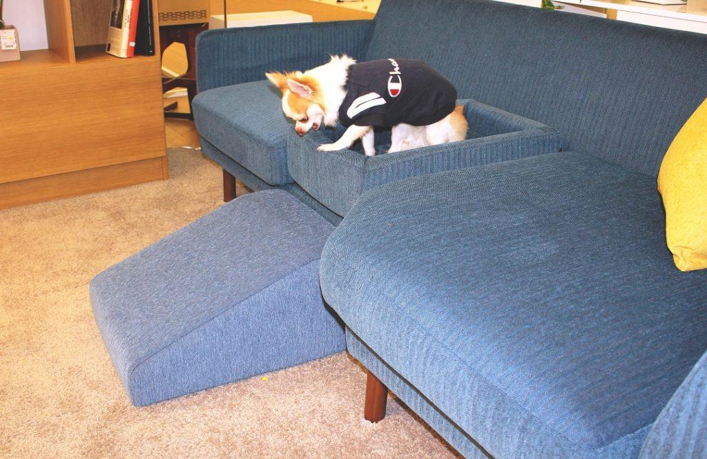 """大塚家具で見つけた""""愛犬と暮らす家具"""""""