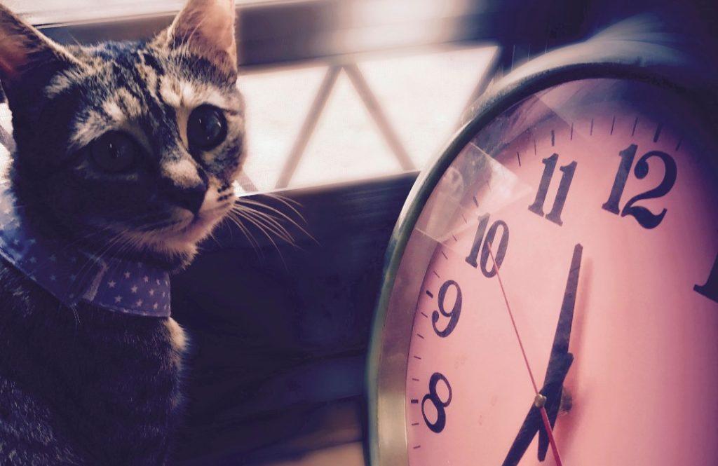 【住み家と風水:第7回】2019年は時計の買い替えがツキを呼ぶ!