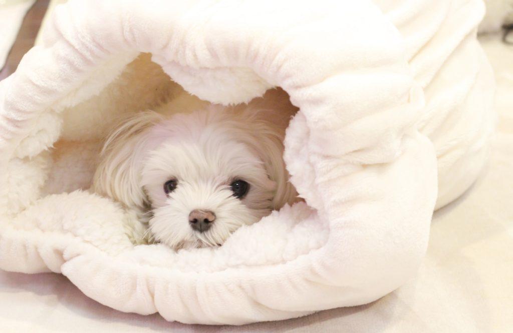 愛犬が超絶可愛く撮れる!【オフカのロールクッション】に話題沸騰