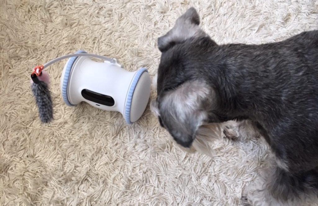 留守中に【愛犬と遊んでくれて、おやつもくれる】ペットが喜ぶロボットをお試し!