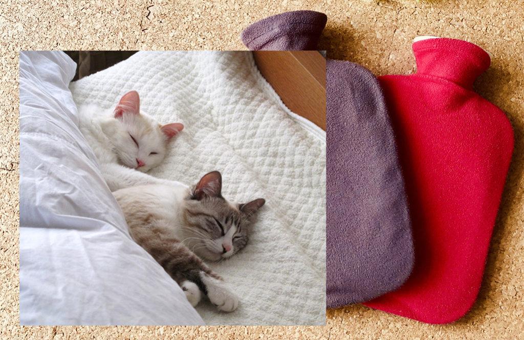 優しい温かさのぽかぽか【湯たんぽ】温活睡眠のおすすめ5選
