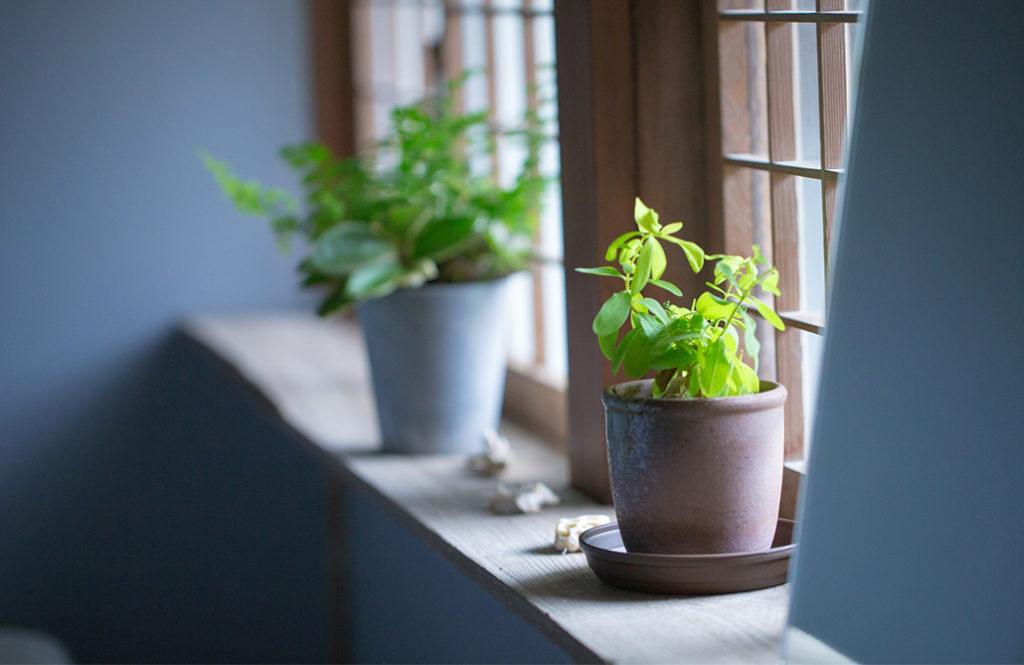 【住み家と風水:第24回】運気もぐんぐん伸びる!?「観葉植物」の選び方