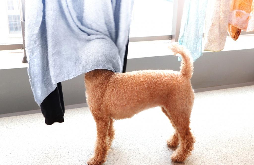 洗剤と水は先に混ぜる。「正しい洗濯方法」なら柔軟剤なしでもふっくら!?