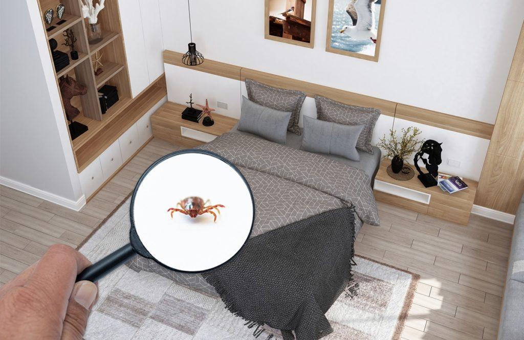 実は「寝室がダニの巣」⁉  これから秋にかけてアレルギーに注意