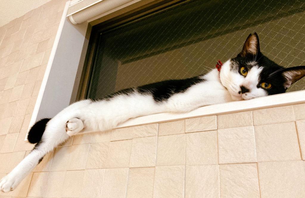 「猫と安心して暮らすために」専門家に指摘された我が家の改善点とは?