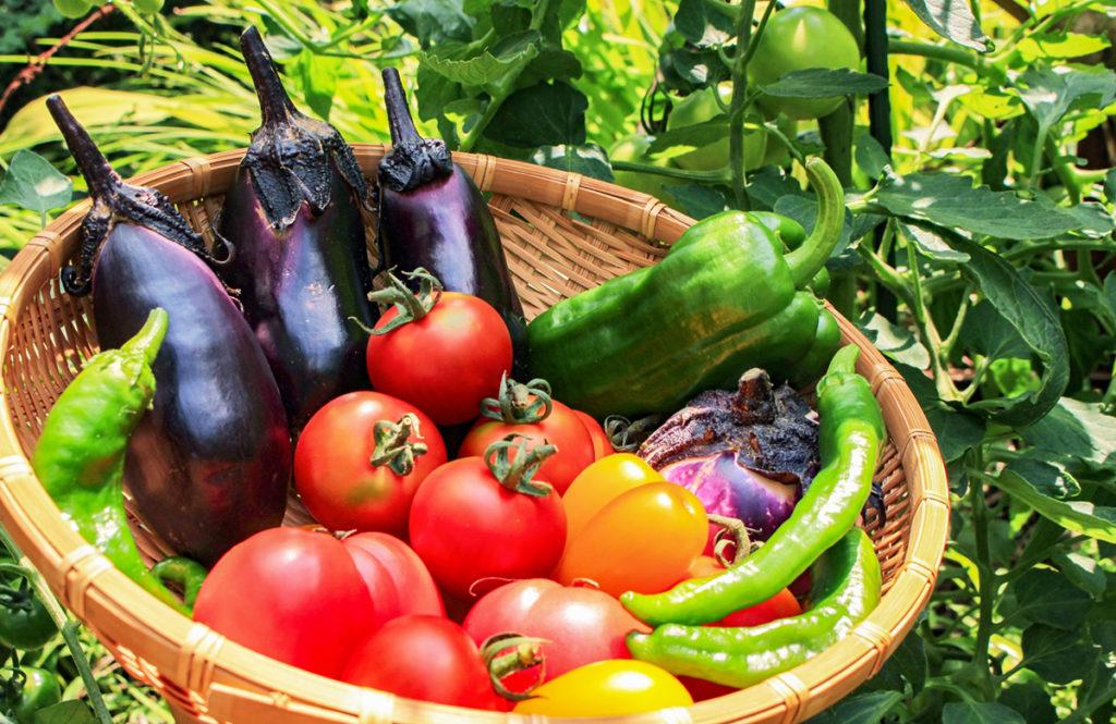 猛暑疲れを癒やす「栄養価の高い夏野菜」管理栄養士おすすめ10選