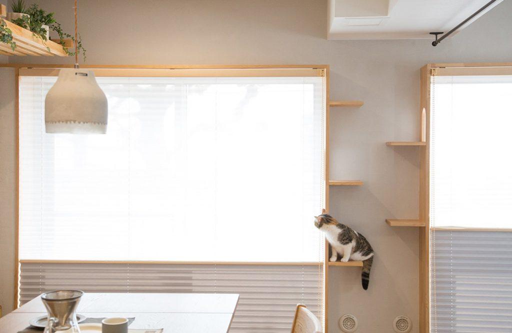 飼い主の悩み解消!「猫専用リノベプラン」で人も猫も楽しく暮らす