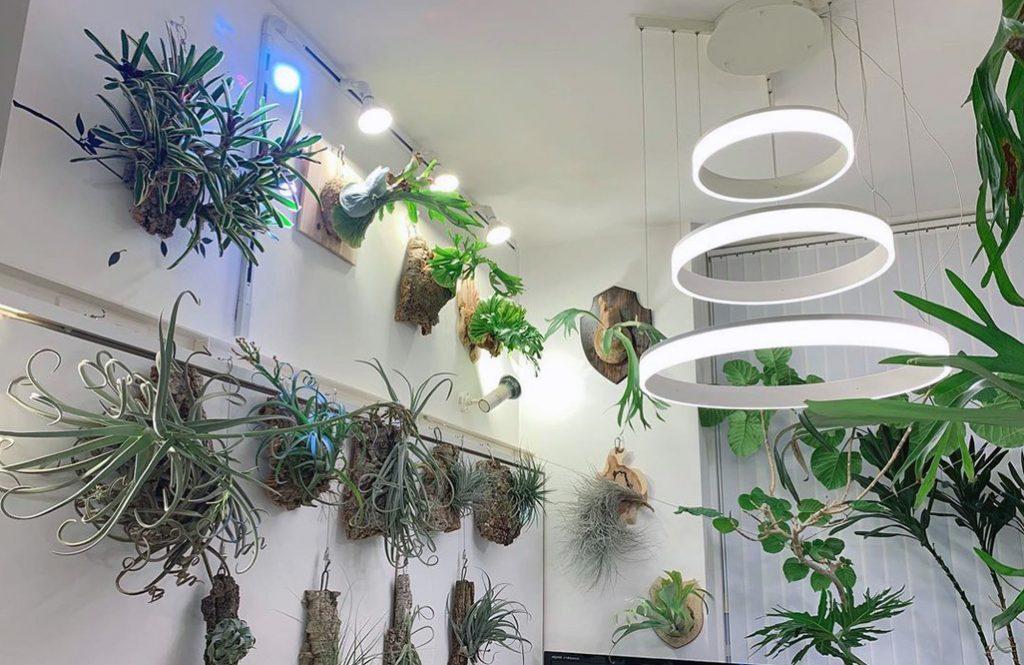 こうすればお洒落!「部屋にグリーンを飾る」6つの成功例